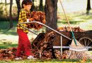 Fall compostable material, leaf collection in Champlain Township
