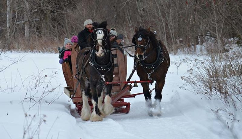 There were horse-drawn sleigh rides at the Dunvegan Carnival.  (Photo Janice Winsor)