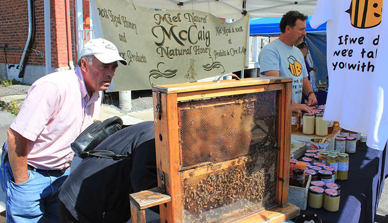 McCaig brought a rack of honeycomb with live bees for presentation at their kiosk.
