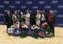 Local winner at the Royal Agricultural Winter Fair
