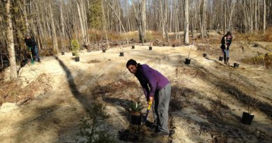 Tree-planting subsidies available from SNC