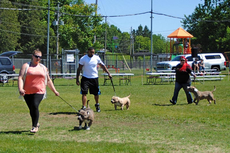 Submitted_American Bully dog show_WEB_2