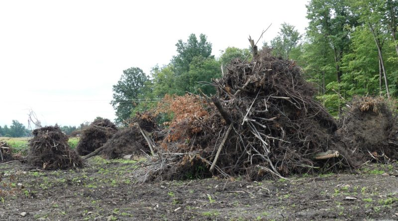 Township of North Glengarry passes clear-cutting by-law