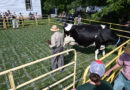 Cow Pie 50/50 raffle a huge success at Glengarry Pioneer Museum's Harvest Festival